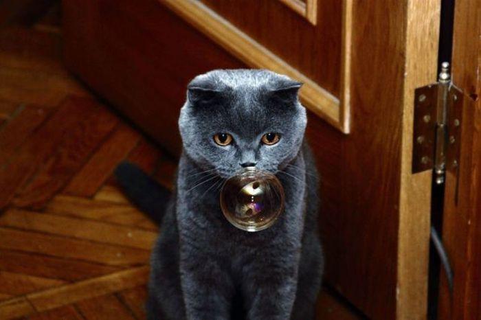 зимней магические способности британских кошек его быт